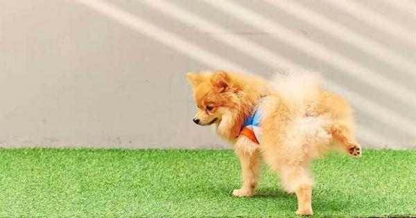 quitar el olor a orines de perro
