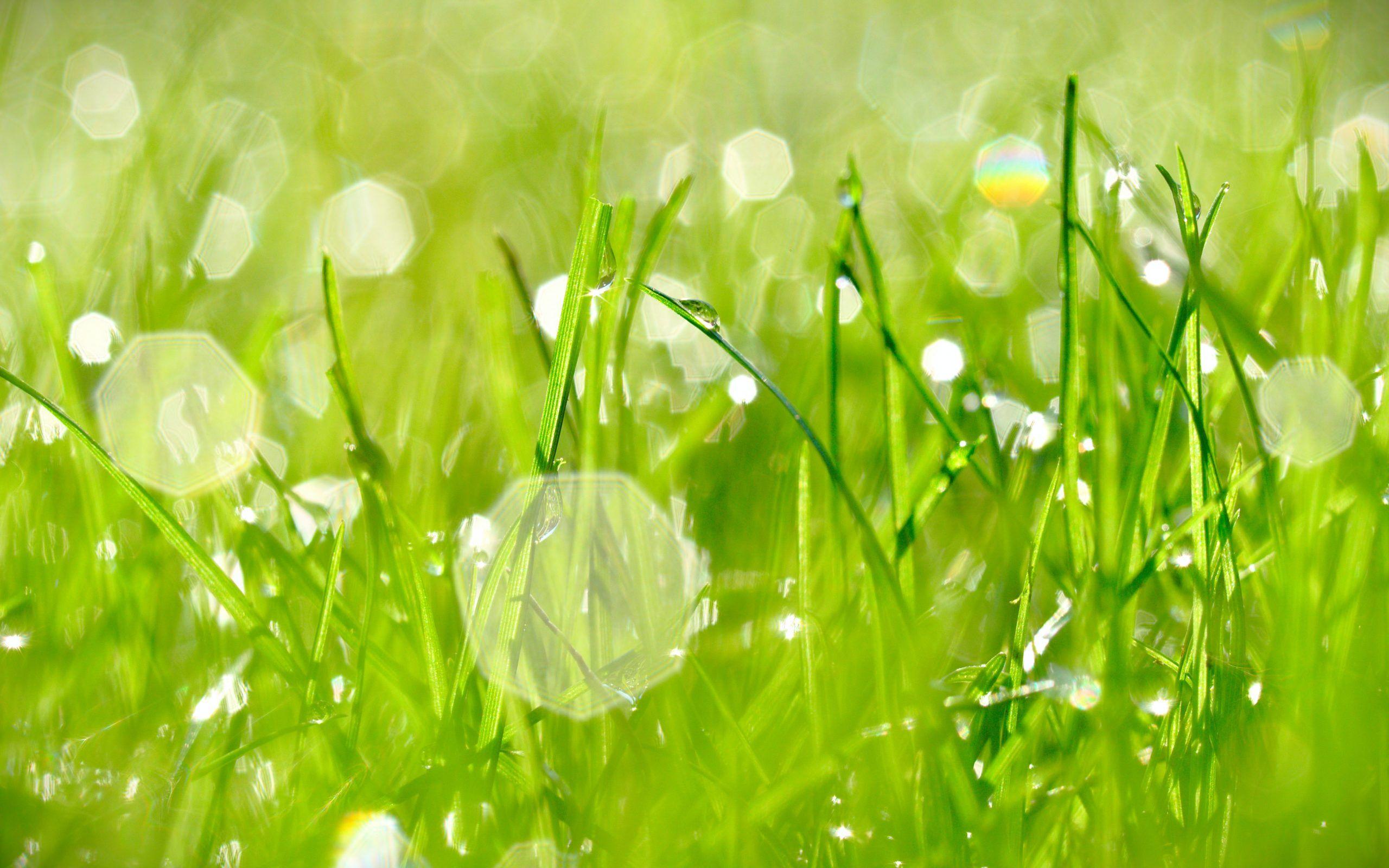 Jardines de bajo mantenimiento bonitos y funcionales for Jardines en espacios pequenos fotos
